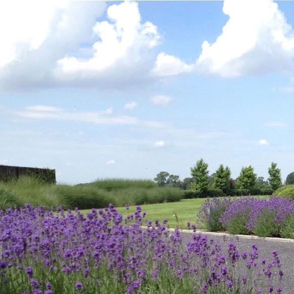 Sfeervolle tuin tussen het landschap  / Oost-Eeklo